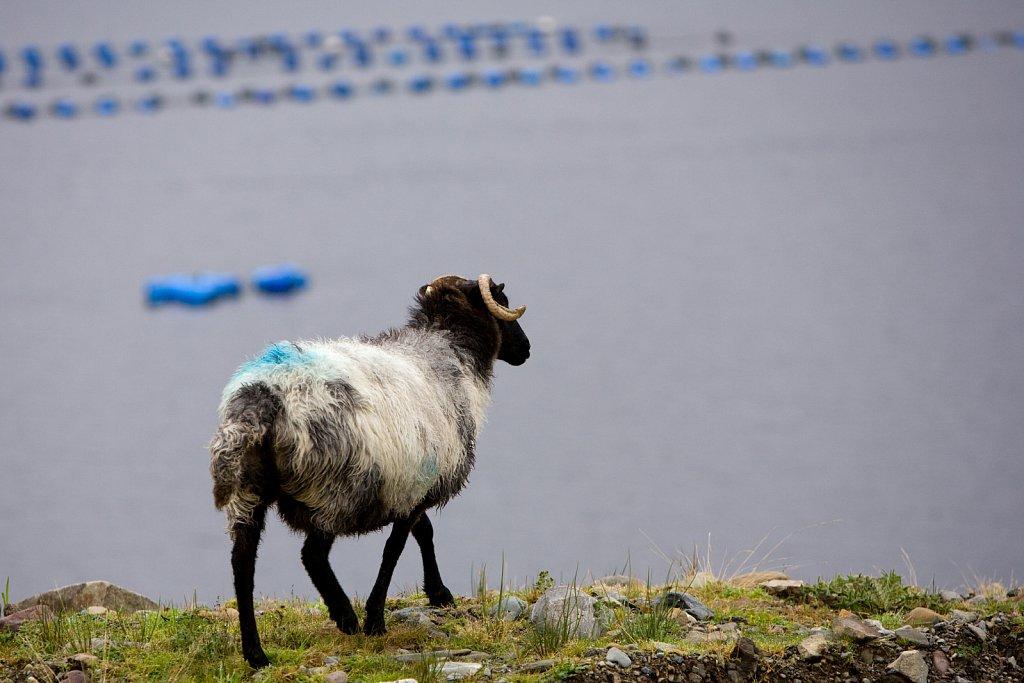 irland-2008-035.jpg
