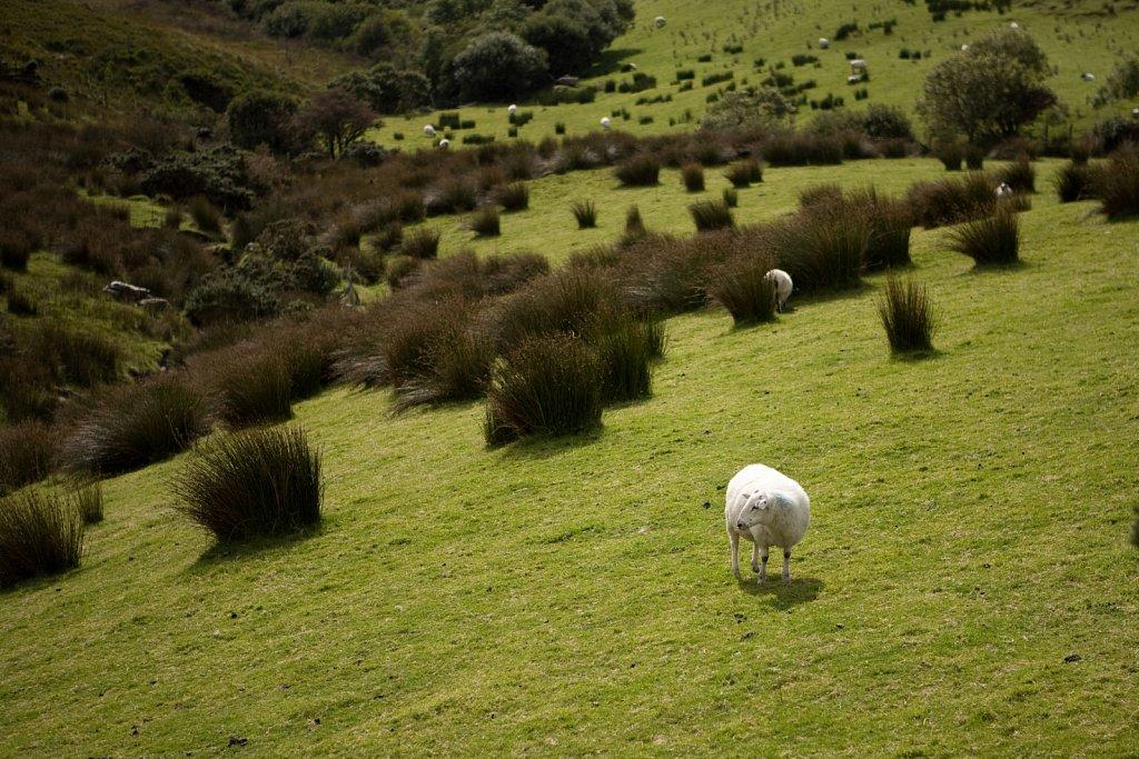 irland-2008-111.jpg