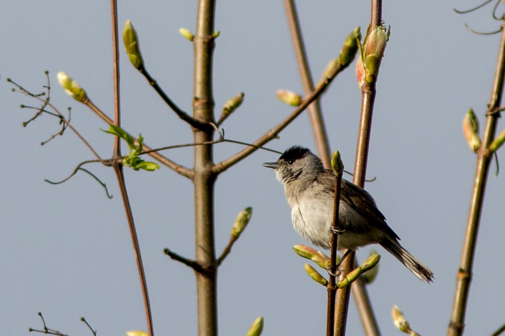 vogelshooting01.jpg