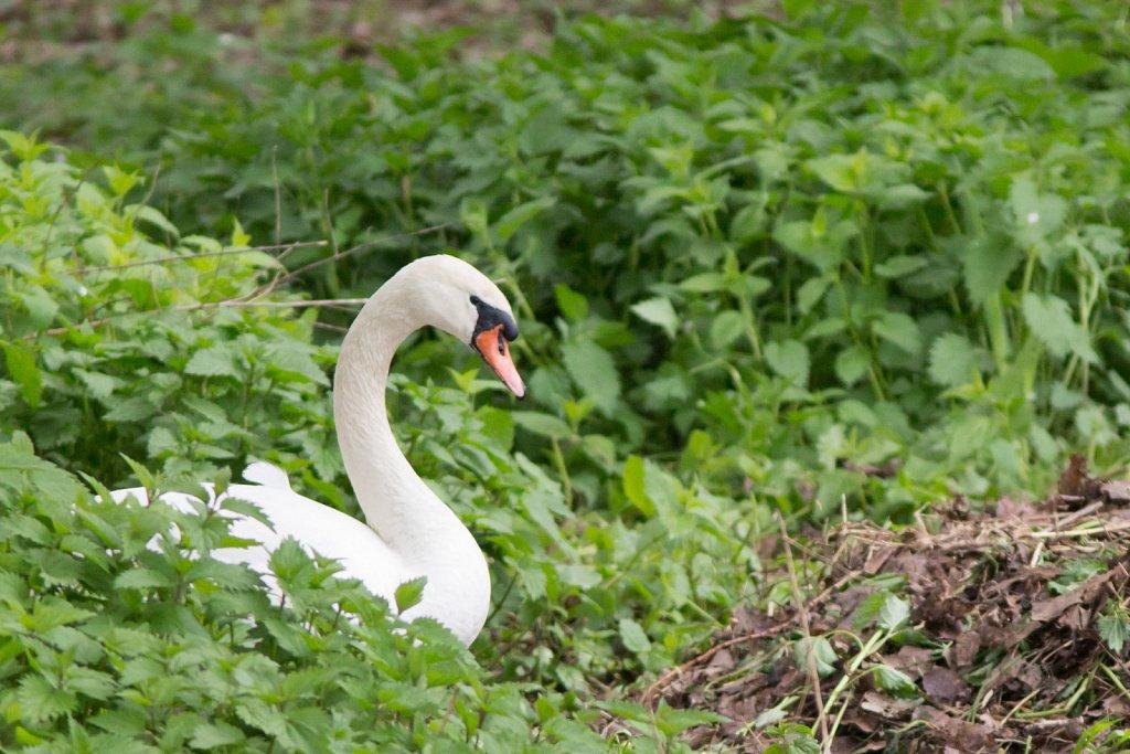 vogelshooting02.jpg