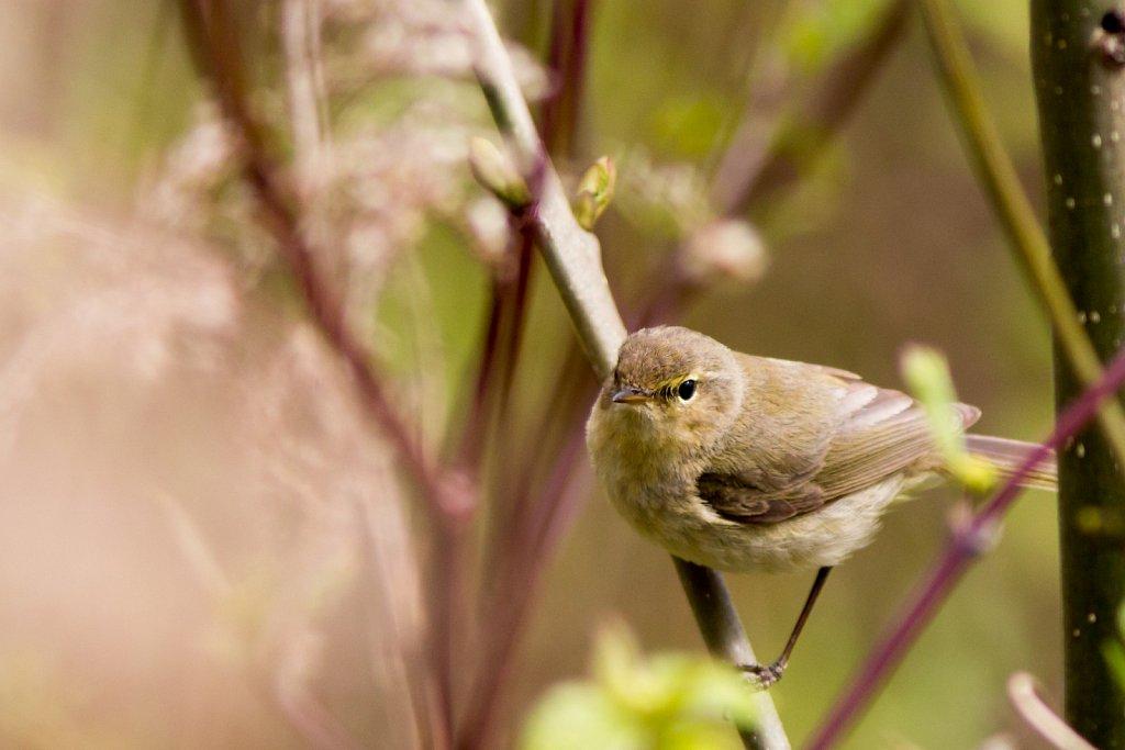 vogelshooting11.jpg