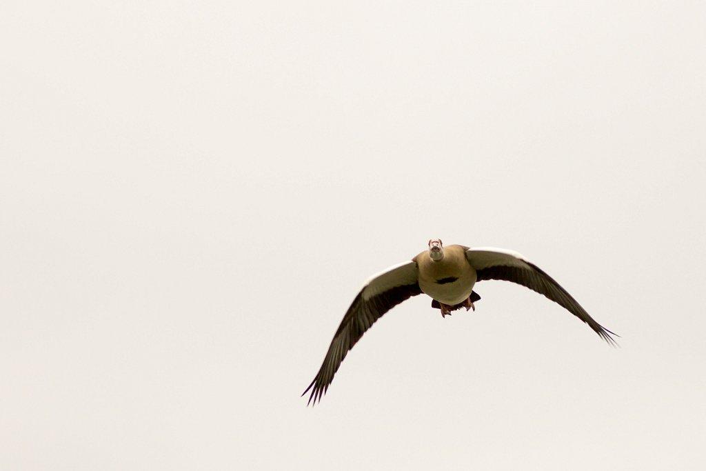 vogelshooting12.jpg