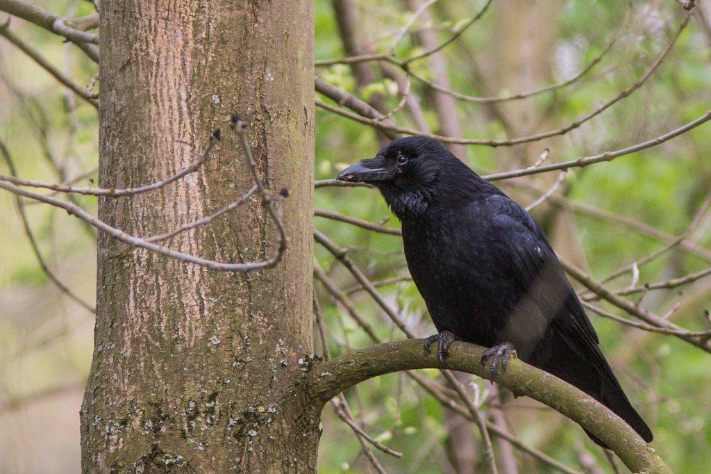 vogelshooting13.jpg