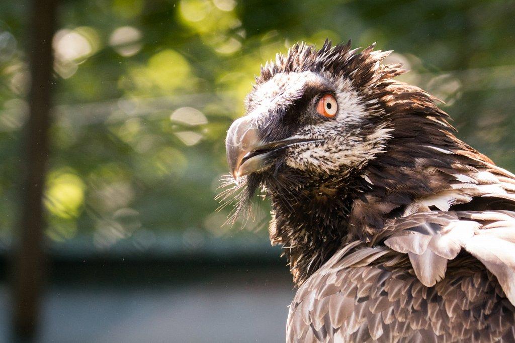zoo-frankfurt01-17.jpg