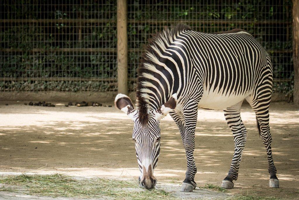 zoo-frankfurt01-25.jpg